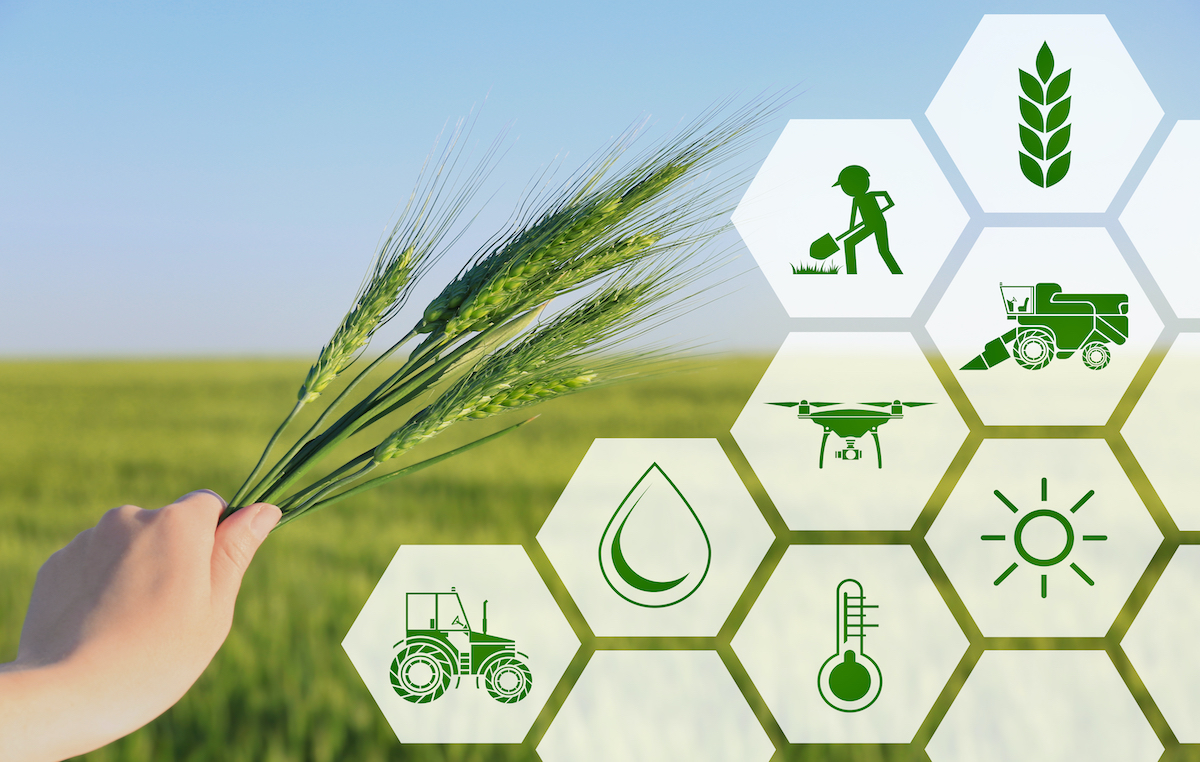 Blockchain For Agriculture Smart Farming Wheat Harvest